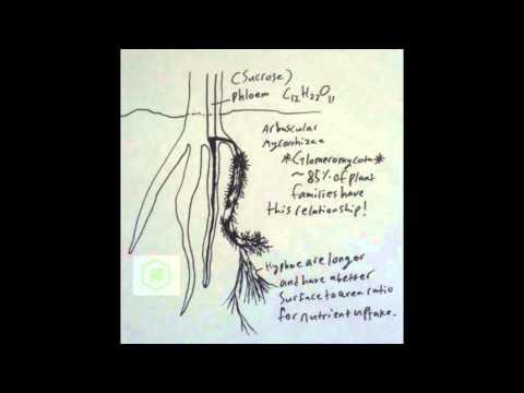 Basic Endomycorrhizal Info