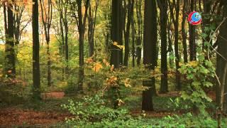 Ergenis over kappen bomen Bakenbergseweg