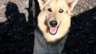 Возьми собаку из приюта sobakavdar ru