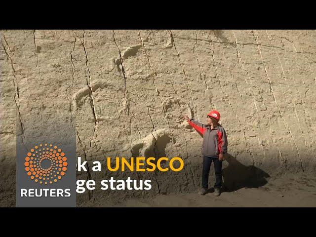 Bolivia seeks UNESCO status for Sucre's massive wall of dinosaur prints