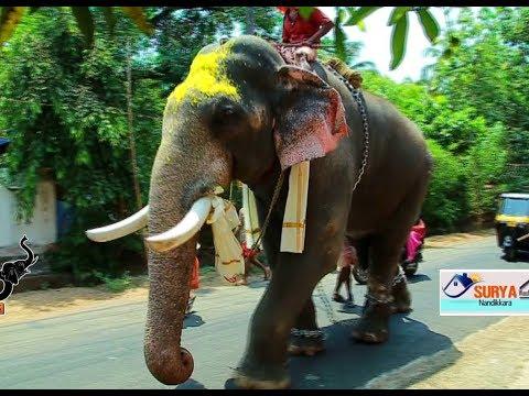 ഗജരാജരത്നം തിരുവമ്പാടി ശിവസുന്ദർ | Thiruvambadi Sivasundar