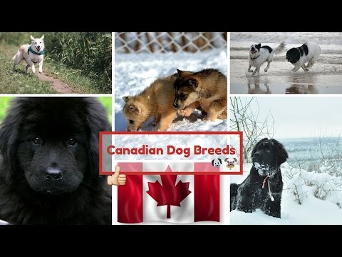 Canadian Dog Breeds