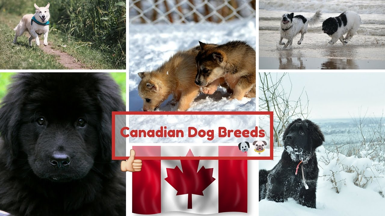 List Of All Dog Breeds That Don