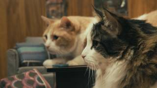 IAMS® Presents: Indoor Cats Staying In