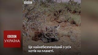 Найсмертоносніший кіт на планеті