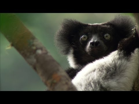 Science Bulletins: Lemurs of Madagascar—Surviving on an Island of Change