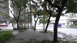 陽明公園及其周邊一片狼籍3 陽明運動公園石碑旁,蘇迪勒颱風過後, Everything was in disorder in Yang Ming Park after Typhoon Soudelor