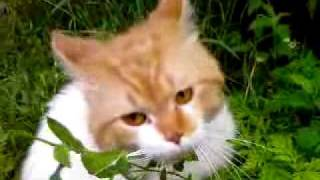 Опасный кот - наркоман