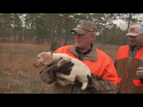 Georgia Quail Hunt Part  1 | Bob Redfern's Outdoor Magazine