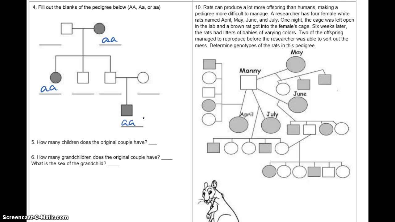 Pedigree Practice Answers YouTube – Pedigree Practice Worksheets