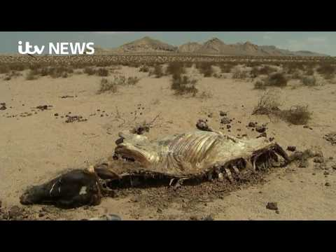 Inside Somaliland's savage drought   YouTube