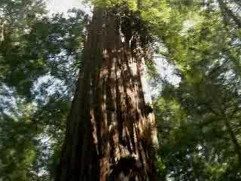 help-save-armstrong-redwoods-state-reserve-from-closure!
