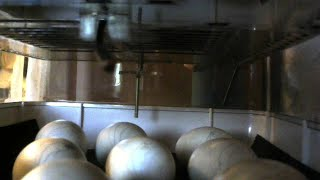 Eggwatch - Live Duck Eggs Hatching