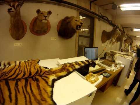 Burke Museum Mammals