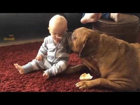 Clever dog repeatedly kisses boy to keep him away from bone