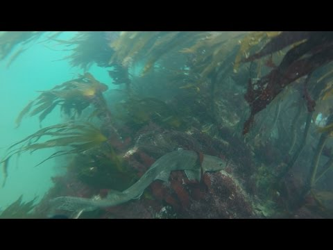 Stradbally Beach IRL, introduction to Spearfishing & how to catch a shark by the tail!