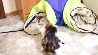 Bugatti Comedy cat