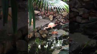 Flamingos Feed Fish || ViralHog