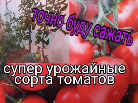 СУПЕР ТОМАТЫ С ОТЛИЧНЫМ УРОЖАЕМ ИЛИ, ЧТО Я БУДУ САДИТЬ ТОЧНО,ЭЛИТНЫЕ СОРТА ТОМАТОВ   томатов   теплице   томаты   супер   сорта   в