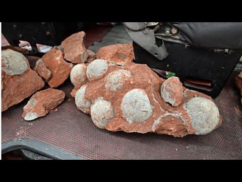 Đào được 43 quả trứng khủng long thời tiền sử trên phố  ở Trung Quốc