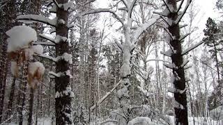 Футаж Метель в лесу