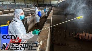 《央视财经评论》 20190704 非洲猪瘟 封锁解除了 风险怎么除?| CCTV财经