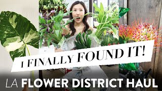 LA FLOWER DISTRICT PLANT HAUL | AMAZING DEALS!!
