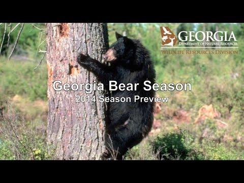 Georgia Bear Season 2014