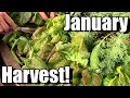 January Vegetable Garden Harvest (Zone 5): Local Food at its Best!