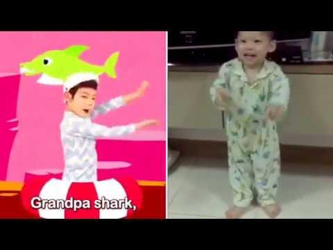 Alex Shark Song Kid Dance Shark Song L Pink Fong L Dances Program