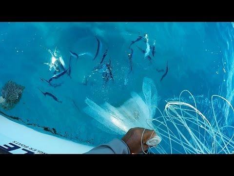 We Slayed Them...Ballyhoo.   Fish, Not So Much.