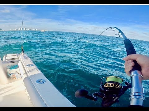OFFSHORE FISHING IS AWESOME In FLORIDA - 2 PB FISH LANDED
