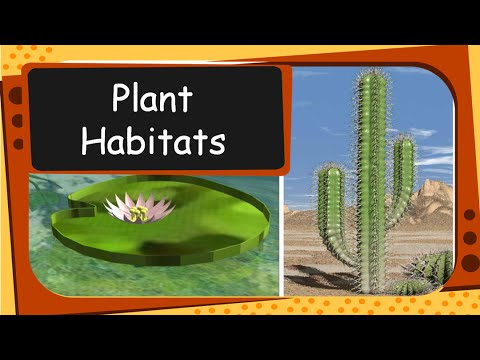 science plant habitat and adaptation english youtube. Black Bedroom Furniture Sets. Home Design Ideas