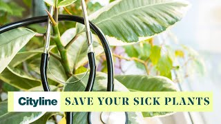 5 gardening hacks to bring your sick plants back to life