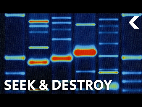 Destroying Cancer Using Your Own Genetically Modified Cells