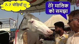 पुष्कर मेला घोडा बाज़ार में ग्राहक ढूंढ रहा है दामाद Horse Deal In Pushkar Fair