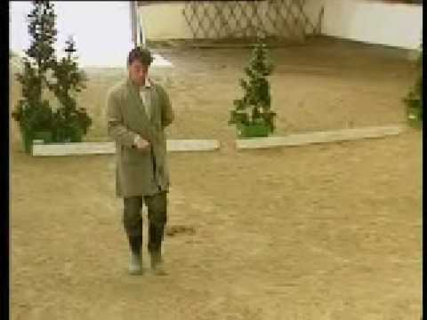 Dressage Without the Horses