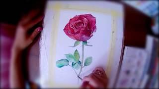 Как нарисовать розу. Роза акварелью