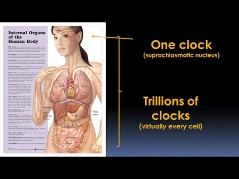 Circadian Rhythms and Your Health Video - Brigham and Women's Hospital