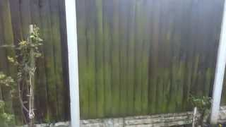 Patio Magic Treatment On Garden Fence