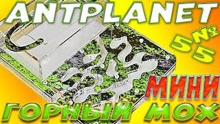 Antplanet МІНІ Гірський мох - Огляд мурашиної ферми