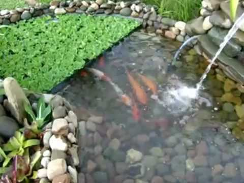 Estanque artificial con base de rocas de rio youtube for Como aclarar el agua de un estanque con peces