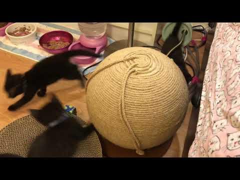 Kittens Playing!