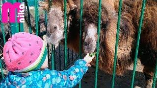 ЗООПАРК. Животные. Видео для детей | ZOO Animals for Kids