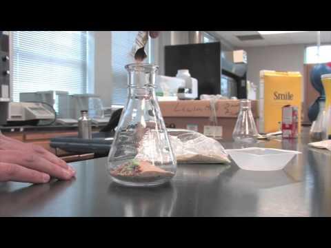 Biofuels Experiment