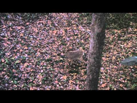 Cold Steel Whitetail Spear Kill #2