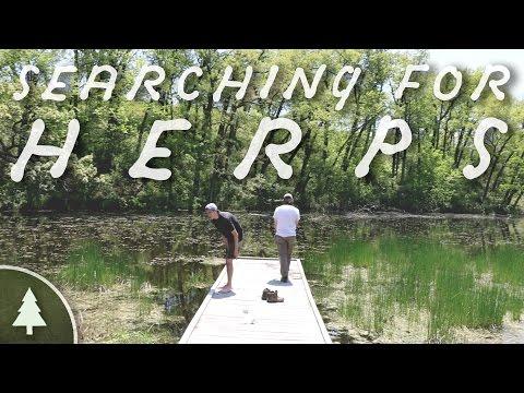 Herping Kettle Moraine - Field Herping
