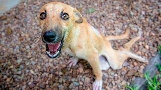 Собака с парализованными лапками несколько дней ползла к людям в надежде на спасение