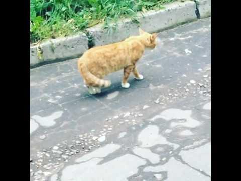 Накурили кота