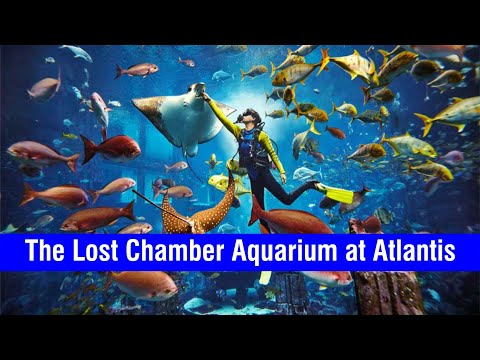 The Lost Chamber Aquarium at Atlantis | Palm Jumairah